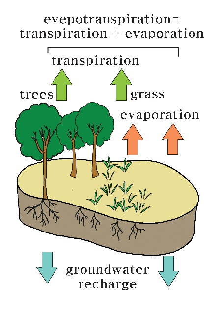 Evaporation, Transpiration, and Evapotranspiration